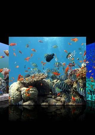 3d海底世界动态壁纸图片