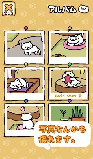 猫咪后院截图