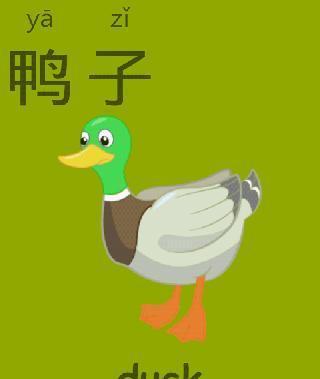 常用汉字识字卡片-儿童英语