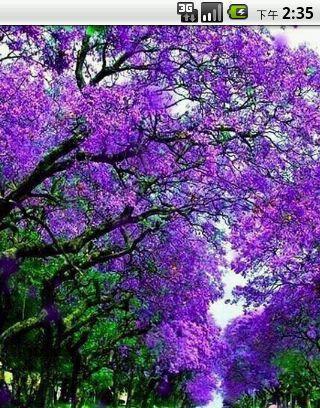 紫色年华的小�_紫色年华经典语录(蝶)