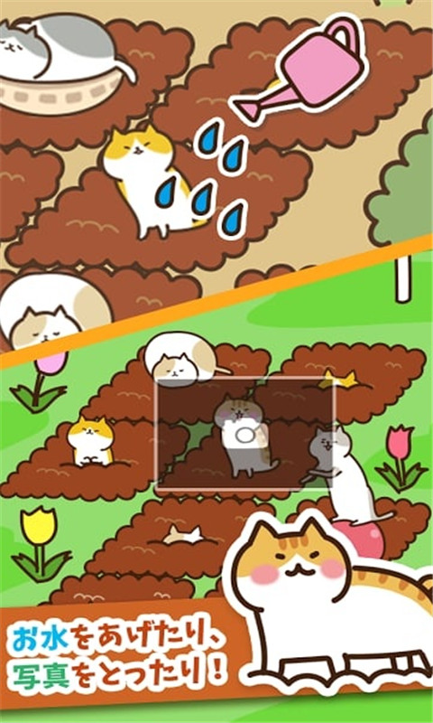 猫咪田园截图