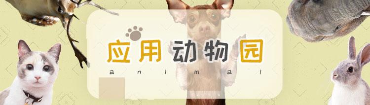 小编:应用动物园