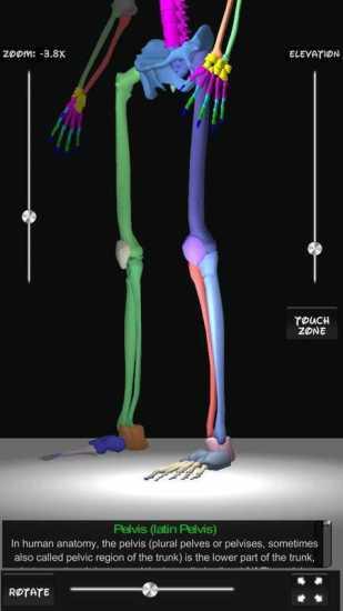Bones Human 3D (anatomy)