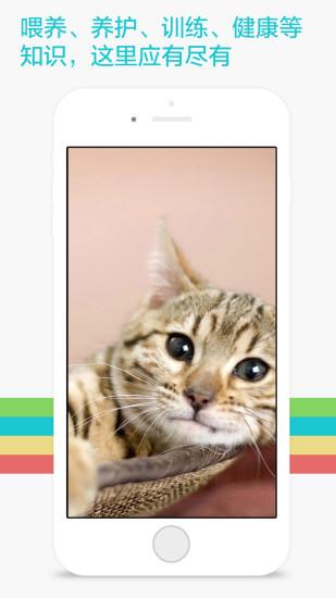 爱宠物猫猫