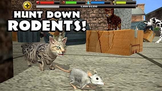 流浪猫模拟