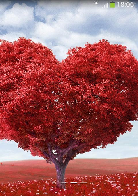 红色的心形树,飞舞的花瓣是在传达着甜蜜的爱情.图片
