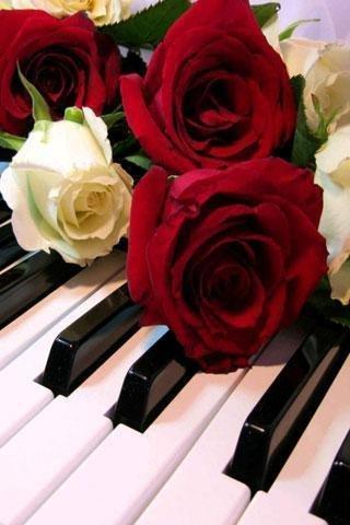 一首适合做手机铃声的钢琴曲图片