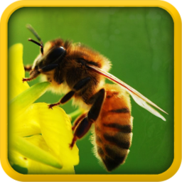 中国蜂产品交易网