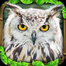 猫头鹰模拟